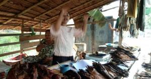 Ikan Patin Salai Di Kampar Punya Peluang Ekspor