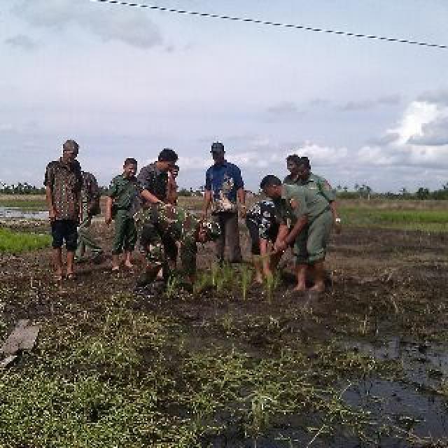 Camat Batang Tuaka dan perangkat Desa Pasir Mas Mengawali Tanam Padi 2016