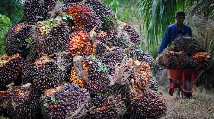 Faktor Penyebab Naiknya Harga TBS Sawit di Riau